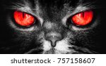 A Cat With Red Devil Eyes  An...