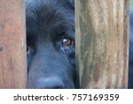 sad dog muzzle through bars.... | Shutterstock . vector #757169359