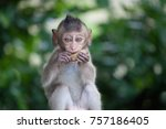 a cute monkey lives in a... | Shutterstock . vector #757186405