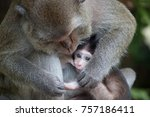 a cute monkey lives in a... | Shutterstock . vector #757186411
