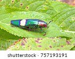 beetles insects bugs  jewel... | Shutterstock . vector #757193191