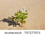 plant sprouting in the desert... | Shutterstock . vector #757277071