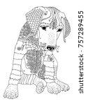 puppy of rhodesian ridgeback.... | Shutterstock .eps vector #757289455