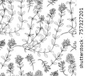 Thyme branch hand drawn vector illustration isolated on white, seamless floral pattern Natural cooking doodle spicy ingredient, Healing herb design for packaging tea, cosmetics, kitchen menu, card