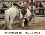 one little horse | Shutterstock . vector #757334935