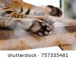 adult tiger closeup | Shutterstock . vector #757335481