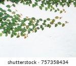 green leaf on white background   Shutterstock . vector #757358434