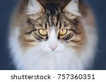 White Brown Fluffy Cat With...