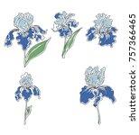 japanese iris flower set.hand...   Shutterstock .eps vector #757366465
