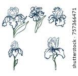 japanese iris flower set.hand...   Shutterstock .eps vector #757366471
