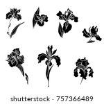 japanese iris flower set.hand... | Shutterstock .eps vector #757366489