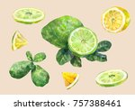 citrus fruit. lemon and lime.... | Shutterstock . vector #757388461