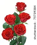 Stock photo red roses on a white background 75739384