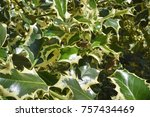 detail  pungitope plant in the... | Shutterstock . vector #757434469