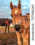 portrait of a horse on a farm | Shutterstock . vector #757506265