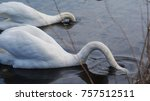 two swans with hidden heads | Shutterstock . vector #757512511