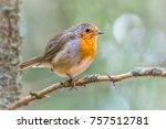 bird robin redbreast   Shutterstock . vector #757512781