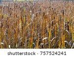 Cattails In A Wetland In Autumn
