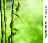Bamboo - green natural background - stock photo
