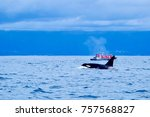 a boat full of whale watchers... | Shutterstock . vector #757568827