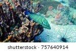 coral reef. diving. underwater... | Shutterstock . vector #757640914