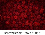 Stock photo red rose background 757671844