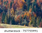 colorful forest on slope.... | Shutterstock . vector #757755991