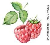 watercolor hand draw raspberry... | Shutterstock . vector #757779331