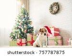 merry christmas. dog jack... | Shutterstock . vector #757787875