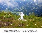 Little Snowman From First Snow...