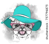 girl puppy in a hat. yorkshire... | Shutterstock .eps vector #757796875