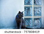 close up of a black domestic... | Shutterstock . vector #757808419