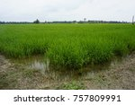 a view of paddy field | Shutterstock . vector #757809991