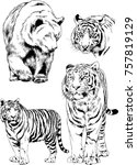 set of vector drawings on the... | Shutterstock .eps vector #757819129