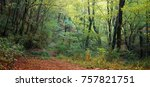 autumn forest in the mountains... | Shutterstock . vector #757821751