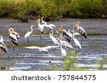 beautiful painted stork ... | Shutterstock . vector #757844575