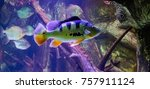 fish of color in the foreground ... | Shutterstock . vector #757911124