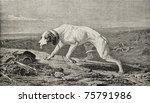 Old Illustration Of A Dog...