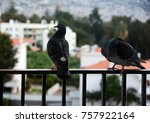 two pigeons on a balcony fence... | Shutterstock . vector #757922164