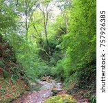 mountain river in the forest | Shutterstock . vector #757926385