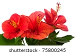 Red Hibiscus Isolated On The...