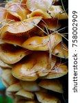 autumn forest. wood mushrooms... | Shutterstock . vector #758002909