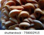 wood mushrooms background in...   Shutterstock . vector #758002915