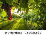 grape harvest in chianti italy | Shutterstock . vector #758026519