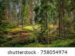 National Park Summer Forest