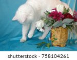 Small photo of White cat gets acquainted with flowers.