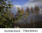 autumn leaves of ginkgo biloba... | Shutterstock . vector #758140441