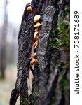 autumn forest. wood mushrooms... | Shutterstock . vector #758171689