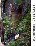 autumn forest. wood mushrooms... | Shutterstock . vector #758171695