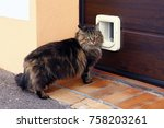 A Norwegian Forest Cat In Fron...
